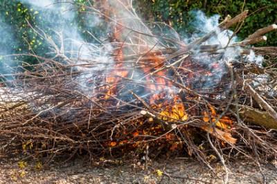 illustration feu de branches