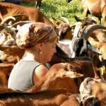 Brigitte Fleuret de la ferme des Barruettes au milieu de ses chèvres