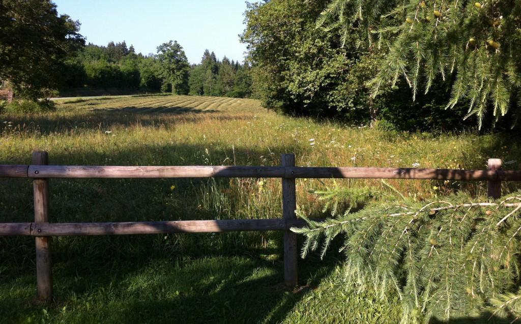 Barrière sapins et champs fauchés au bourget en huile