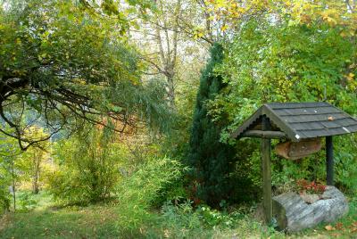 Végétation d'automne à l'entrée des Amiers
