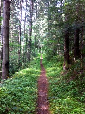 Sentier en sous bois au bourget en huile