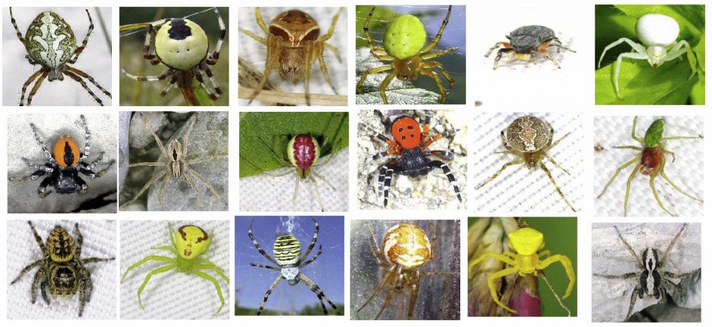 araignées présentes en savoie